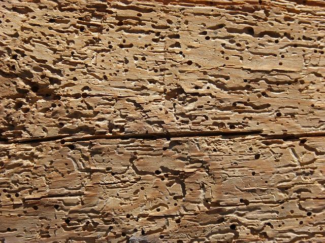 zničené dřevo